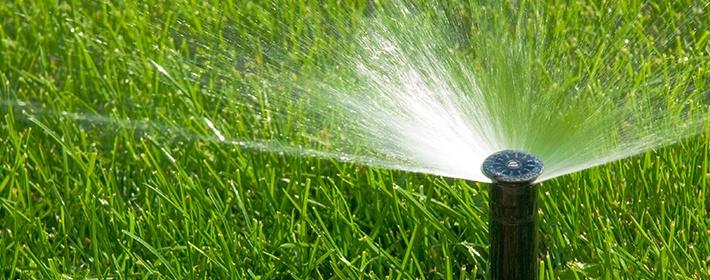 Jak właściwie pielęgnować trawnik, aby trawa była zielona