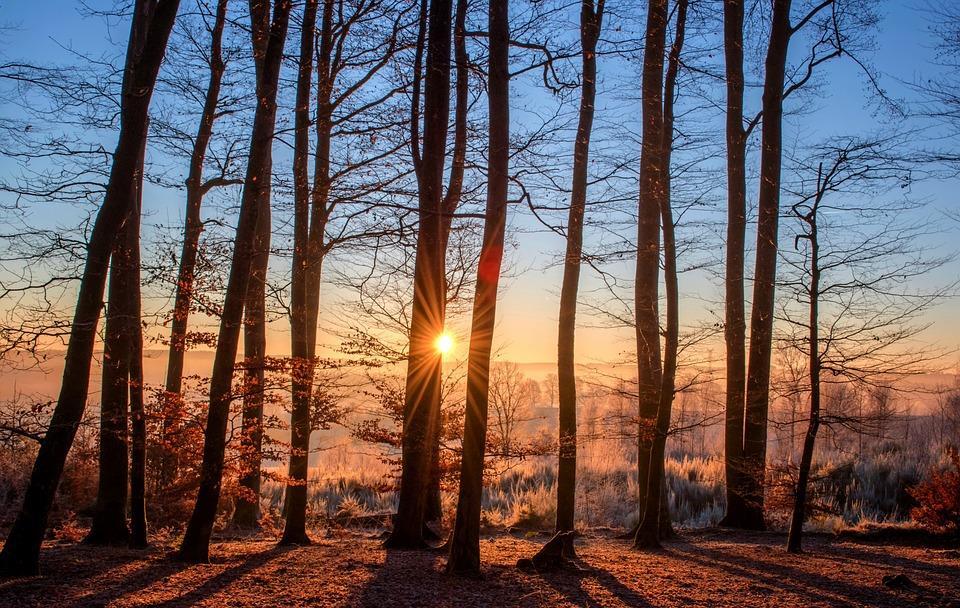 Walka o drzewa: co dla jednych jest atutem, to dla innych zagrożeniem