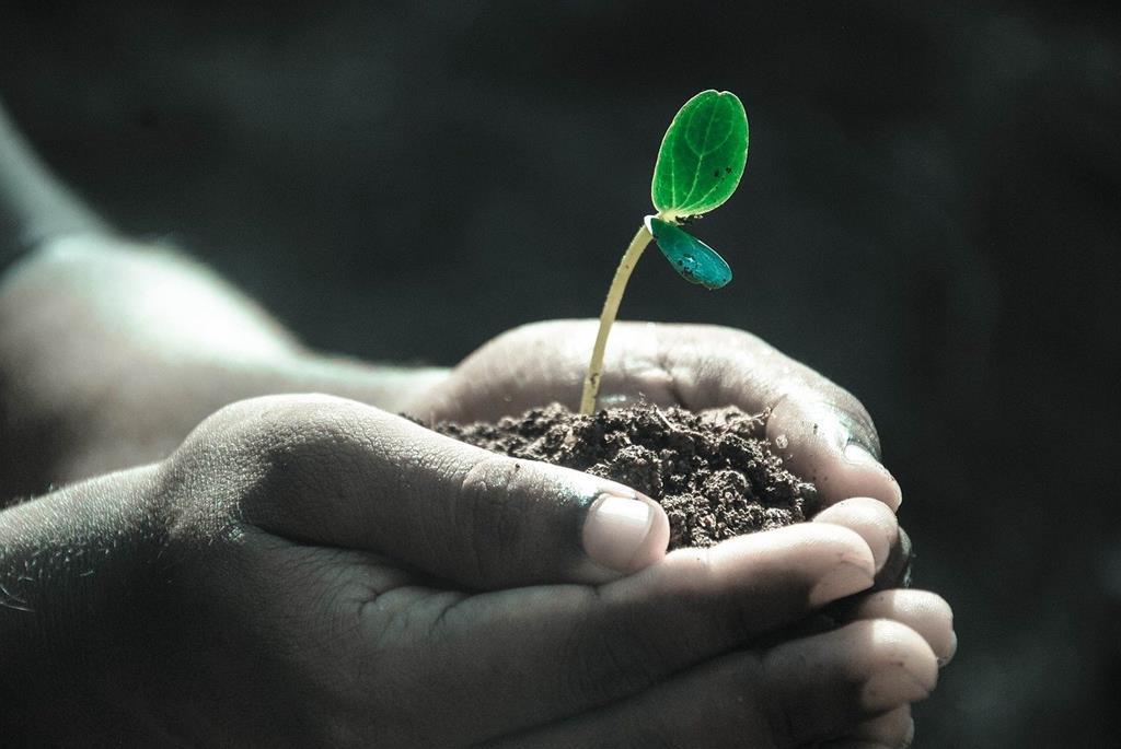 ziemia ogrodowa - ziemia przesiewana - Zabrze